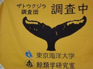 ザトウクジラ調査船の旗