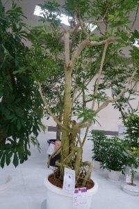観葉植物の部