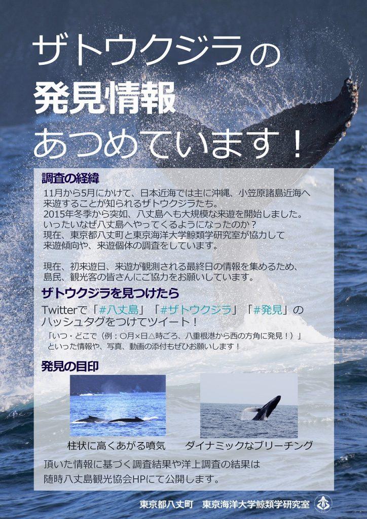 ザトウクジラの発見情報あつめています!