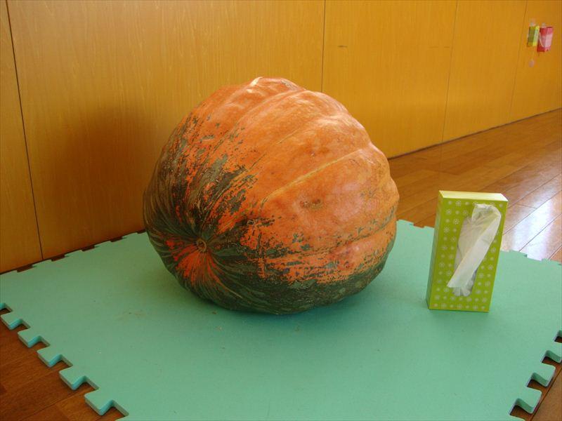 子ども家庭支援センター 巨大かぼちゃ